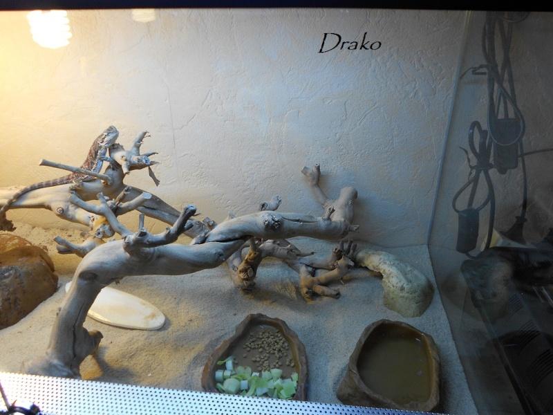 le terra de Drako Dscn0111