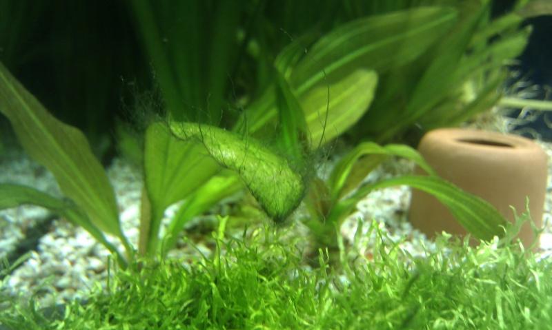 algues sur sol et plantes Imag0113