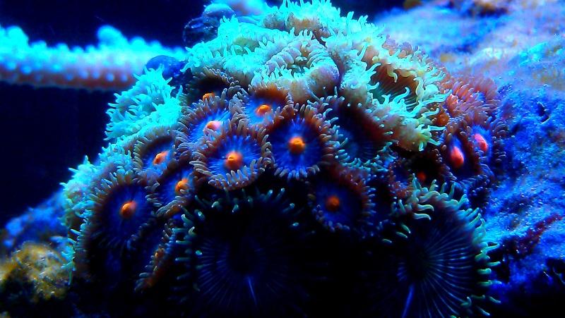 polypes  Imag0135