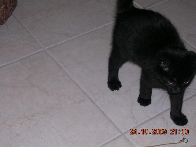 *** spécial *** photos de nos animaux *** - Page 6 Dscn3113