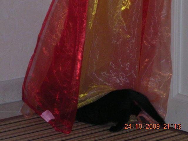 *** spécial *** photos de nos animaux *** - Page 6 Dscn3114