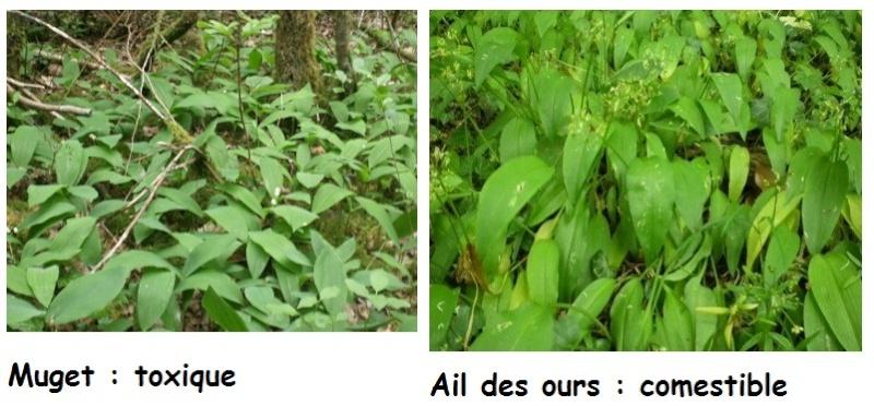 [Plantes] Reconnaitre les toxiques et mortelles Confus12