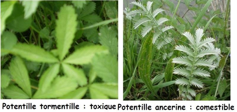 [Plantes] Reconnaitre les toxiques et mortelles Confus13