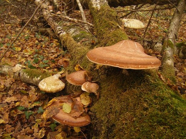 Objets en champignon Dscf1510