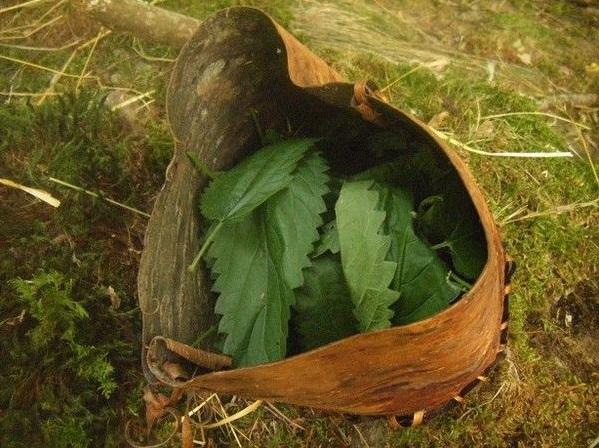 [DIY - Technique bushcraft] fabriquer un contenant en écorce d'arbre Pict0110