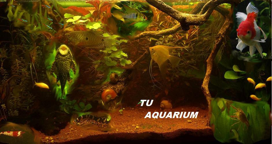 Nuevos invertebrados! Tu_aqu11
