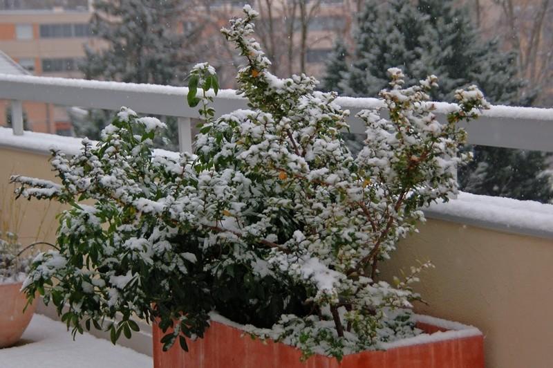 Sous la neige... Dsc_0014
