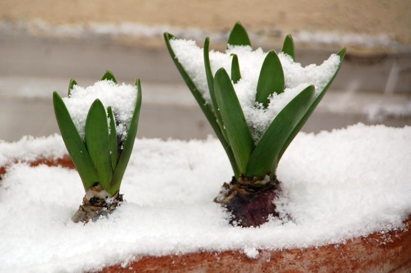 Sous la neige... Dsc_0016