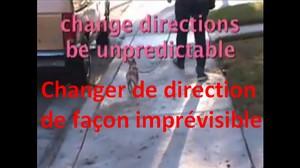 Marche en laisse détendue (vidéo) - Page 4 Text_610