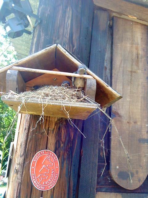 Nos oiseaux de nos jardins A_201111