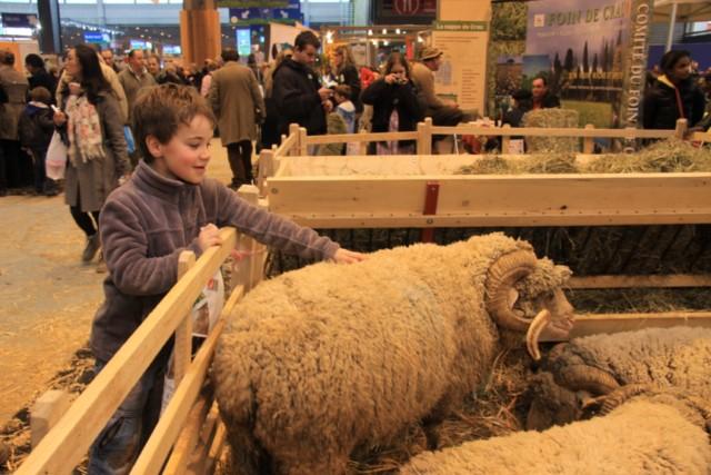 Le salon de l'agriculture de Paris 2012 Belier12