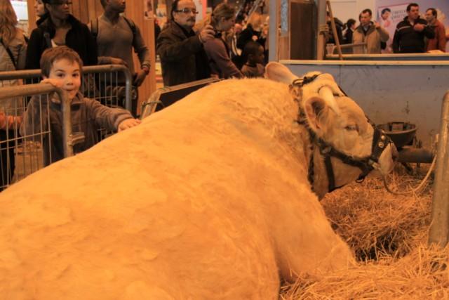 Le salon de l'agriculture de Paris 2012 Boeuf310