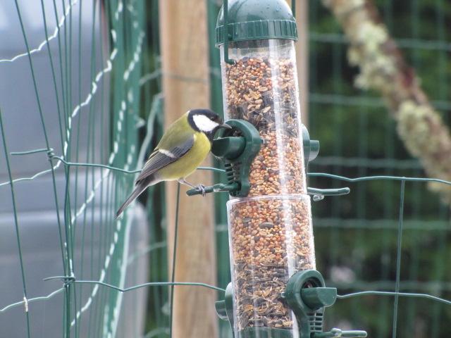 Nos oiseaux de nos jardins Janvie13