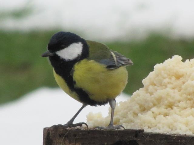 Nos oiseaux de nos jardins Janvie14
