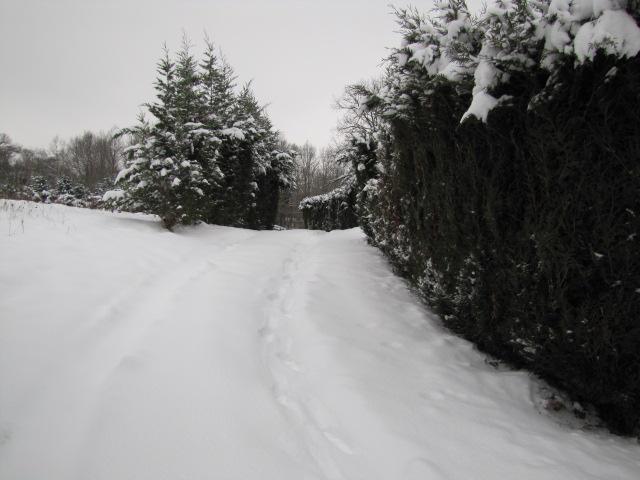 L'hiver tardif mais magnifique Janvie17