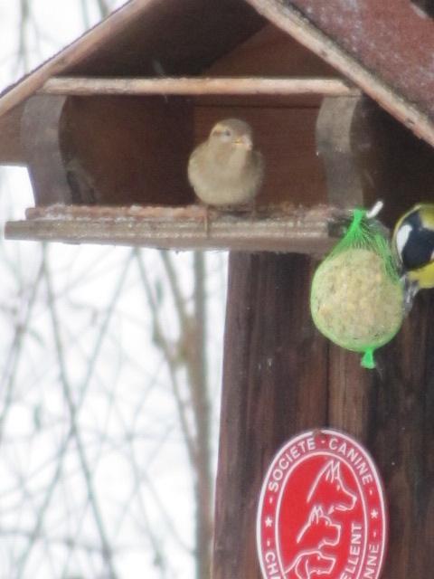 Nos oiseaux de nos jardins - Page 2 Novemb10