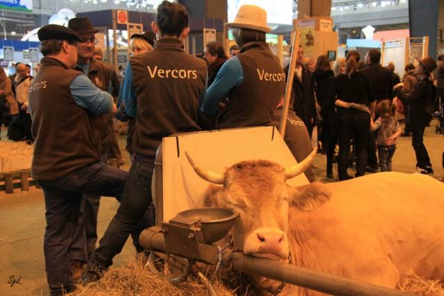 Le salon de l'agriculture de Paris 2012 Vache110