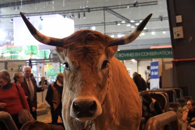 Le salon de l'agriculture de Paris 2012 Vache210