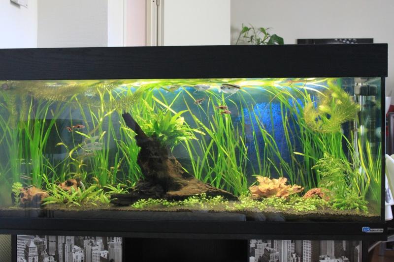 250L Asiatique planté Img_6910