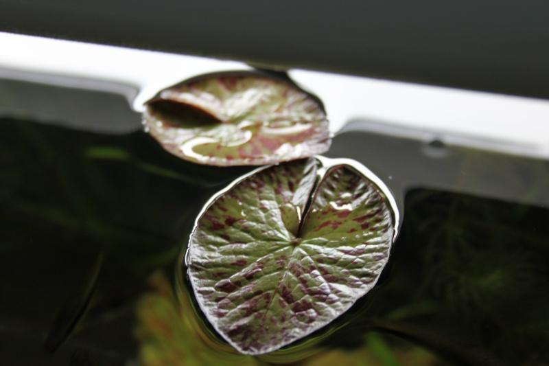 250L Asiatique planté Img_6912
