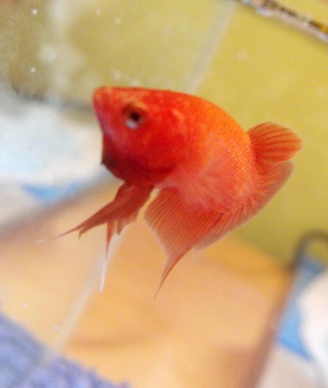 Mon nouveau poissons !  Sans_t23