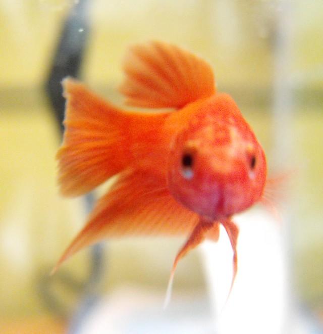 Mon nouveau poissons !  Sans_t24