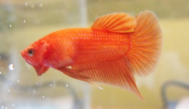 Mon nouveau poissons !  Sans_t25
