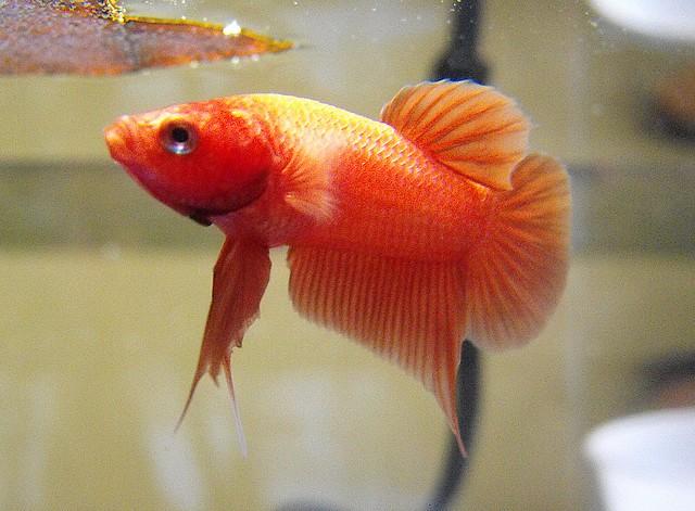 Mon nouveau poissons !  Sans_t26