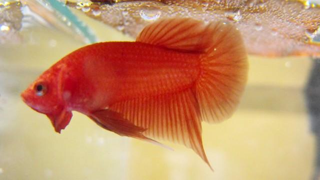 Mon nouveau poissons !  Sans_t27