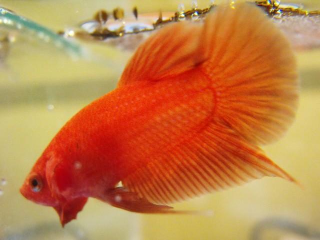 Mon nouveau poissons !  Sans_t28