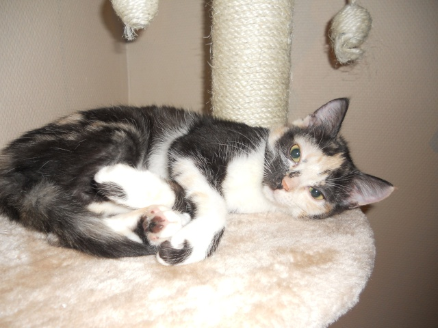 Gaya et Cookie, mes deux fifilles ! Dscn1810