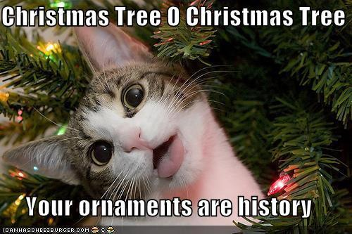 Christmas is coming soon. Cat10