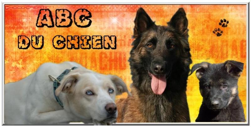 forum d'entraide pour les possesseurs de chiens