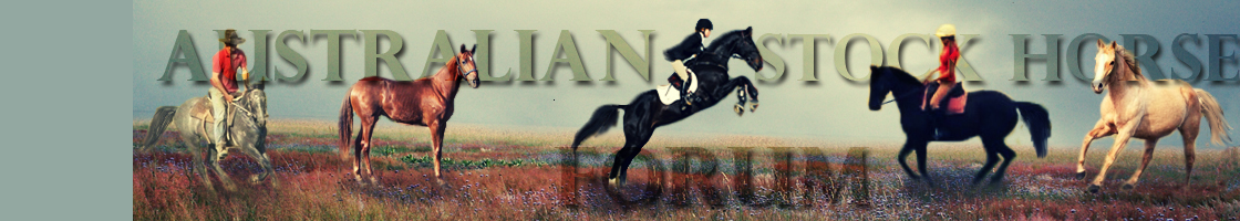 3 Horses & a Mini For Sale Banner12
