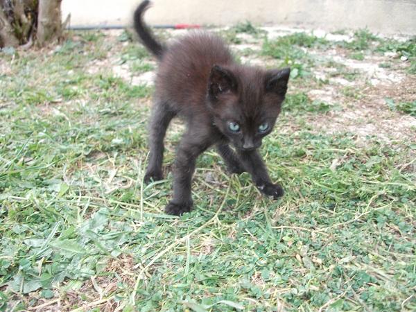 Pitou, mon chat :) Pitou10