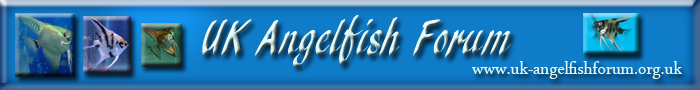 The British Cichlid Assosiation Convention and Auction is nearly here! Some lot images!!! Banner10
