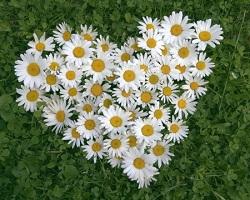 Наш цветочный рай 71738911