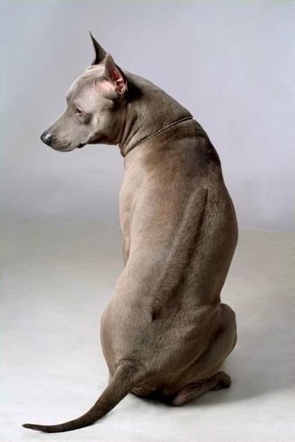 Кто знает, какой породы собачки? 0_5d9910