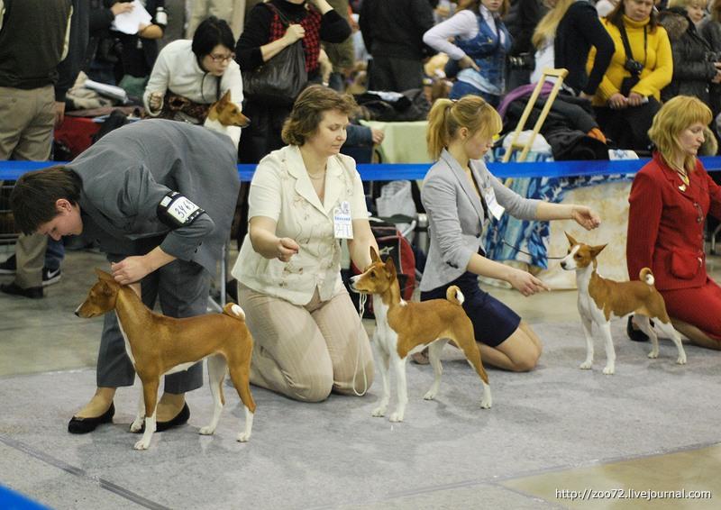 Для чего проводят  выставки собак? 0_62ee10