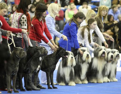 Для чего нужно ходить на выставки собак? 14d3eb10