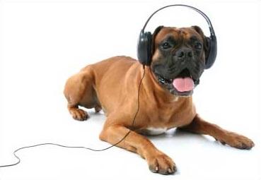 Музыкальные новинки для собак 16972910