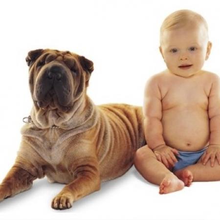 Зачем ребенку собака? Articl10