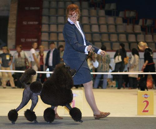 Для чего проводят  выставки собак? Img_3510