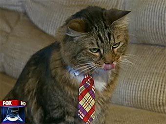 Кот, живущий в городе Спрингфилд, штат Вирджиния, стал претендентом на место в Сенате США.  Pictur10