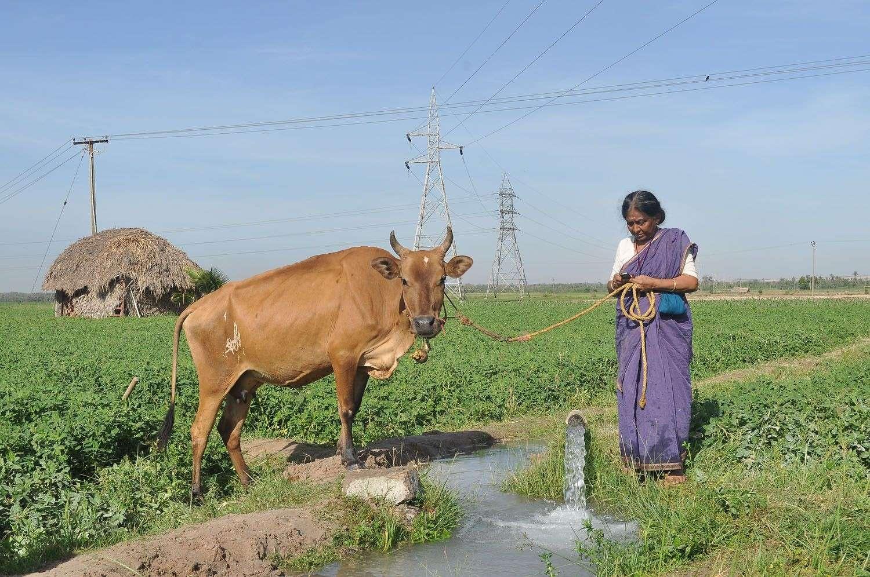 அம்மாவின் கை பேசி - புகைப்படங்கள் Ammavi17