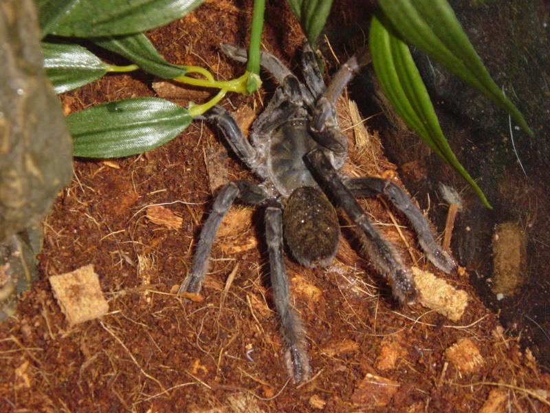 My 8-legged friends Dsc03310