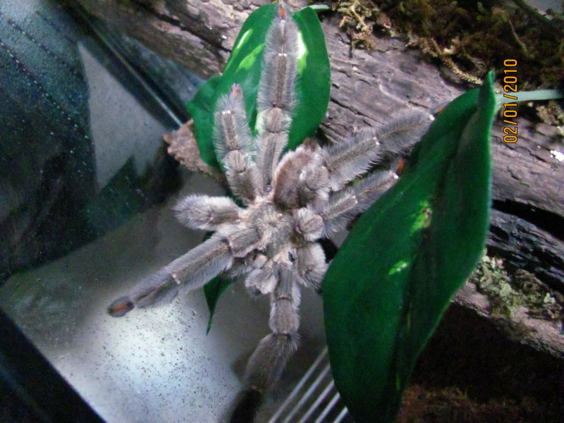My 8-legged friends Img_0210