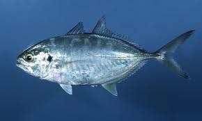 la vie des poissons - الأسماك 11112