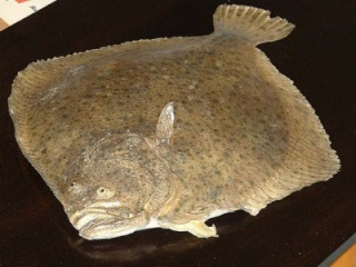 la vie des poissons - الأسماك 23510