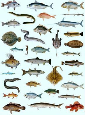 la vie des poissons 2450-113